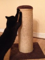 Best scratch post ever £38